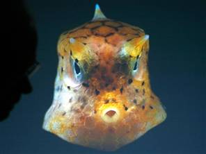 creatures-of-the-sea.jpg