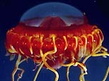 underwater-spaceship.jpg