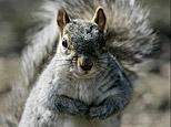 squirrel_big.jpg